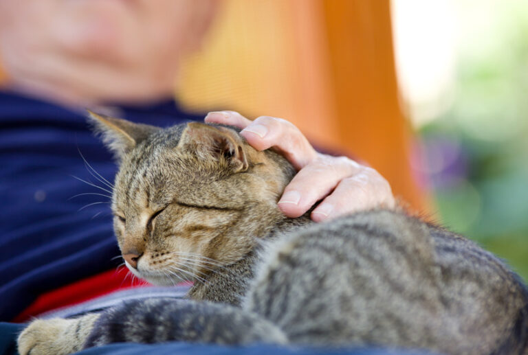 Tips For the Long Term Cat Care
