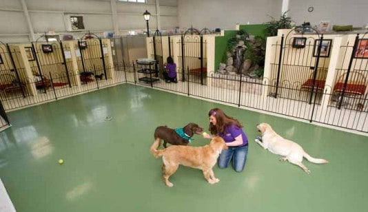 Travel Made Easy: Boarding Facilities for Your Pet